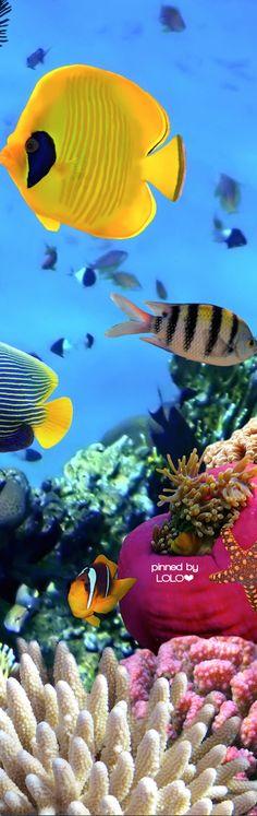 Great Barrier Reef   LOLO