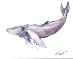 Humpback Whale Original watercolor painting 14 X by ORIGINALONLY, $48.00