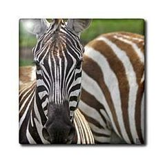 """Common zebra Lake Nakuru Kenya Africa - 4 Inch Ceramic Tile by Kike Calvo. $11.99. Dimensions: 4"""" H x 4"""" W x 1/4"""" D. Clean with mild detergent. Construction grade. Floor installation not recommended.. High gloss finish. Image applied to the top surface. Common zebra Lake Nakuru Kenya Africa Tile is commercial quality. Construction grade, glossy finish tiles are produced from material clays and minerals into exceptionally reliable finished products that can also be used as a d..."""