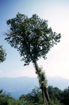 https://flic.kr/p/JjveiG   Monti di Ronco, Ticino, Svizzera