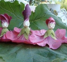 hollyhock dolls. my sister and I used to make these every summer when we were little