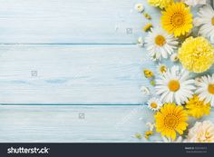 Royalty Free Springtime Pictures, Images and Stock Photos - iStock Party Background, Wooden Background, Yellow Background, Background For Photography, Photography Backdrops, Wallpaper Pc, Wallpaper Backgrounds, Summer Flowers, Yellow Flowers