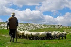 9/3 SHEPHERD ( NOUN ) Someone whose job is to take care of sheep.
