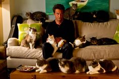 Matthew and 13 Cats: | Here Is Matthew Perry With 13 Cats