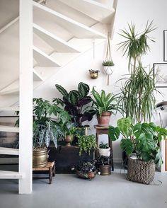 Plante d'intérieur sous escaliers Vu sur mybackyardgardening.stfi.re
