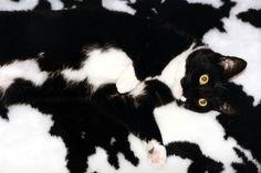 mascotas-camufladas- (12)