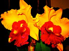 Cattleya Orchids for fall. Etsy Shop SmartBlondes Handmade@Amazon/ Shop Smart Blondes