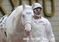 White Vessel, a dominant white thoroughbred stallion, is a full brother to the… All About Horses, Racehorse, White Horses, Palomino, Thoroughbred, Courses, Horse Racing, Beautiful Horses, Equestrian
