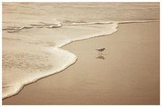 A (baby) seagulls life. Cruisin' much?  . #theyseemecruisin #theyhatin #seagull #seagullslifeyo #babyseagull #sand #sea #cruisin #suninnovember #portosanto #madeiraisland by eiaduarte