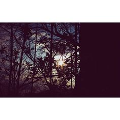 #evening #fujifilm #fuji #xseries #trip #tour #landscape #tree #availablelight #xf35f2 #xf35mm #xe2 #X100T #khris #photography by k_hris