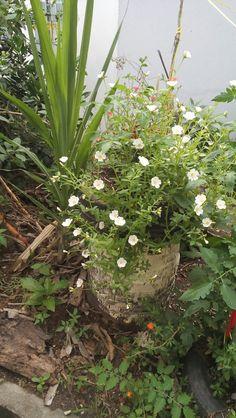Meu jardim, pneu com flores brancas😍😍
