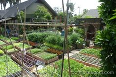 Raised-bed intensive garden - urban homestead