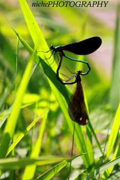 Its dragon fly love.