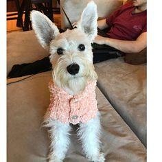 Dog Hoodie Sweater Blue Pet Clothing Hand Knit Dog Clothes Handknit Dog Sweater by BubaDog Small Dog Sweaters, Small Dog Clothes, Puppy Clothes, Crochet Dog Clothes, Crochet Dog Sweater, Ship Dog, Dog Sling, Pull Crochet, Bichon Frise