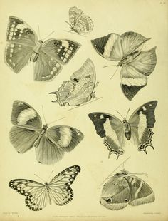Parts I-II - Descriptive catalogue of the lepidopterous insects contained in the Museum of the Honourable East-India Company : - Biodiversity Heritage Library