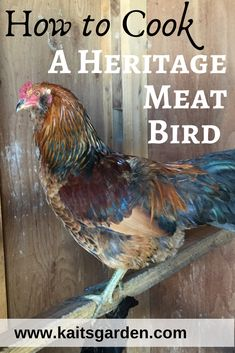 How to Cook a Heritage Meat Bird / Backyard Chickens / Raising Livestock / Homesteading / www. Raising Quail, Raising Farm Animals, Raising Ducks, Raising Goats, Raising Chickens, Backyard Ducks, Chickens Backyard, Heritage Chicken Breeds, Garden Animals