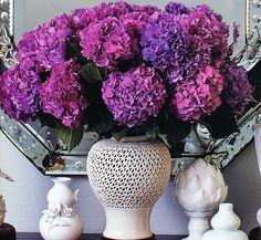 Purple Hydrangea, O Mag, Brabourne Farm by camillestyles, via Flickr