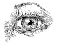 Drawing Ink jdoub's art world: Pen and ink drawings for the week of dec 2 Realistic Eye Drawing, Drawing Eyes, Drawing With Pen, Fine Art Drawing, Drawing Hair, Drawing Techniques, Drawing Tutorials, Painting Tutorials, Ink Pen Drawings