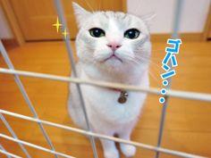 日曜日の3猫 うにオフィシャルブログ「うにの秘密基地」Powered by Ameba