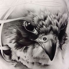 Just the of something I worked on still have a lot more to go on this falcon/barber piece. Bird Drawings, Animal Drawings, Tattoo Drawings, Falke Tattoo, Mago Tattoo, Fuchs Tattoo, Eagle Drawing, Tattoo Hals, Eagle Art