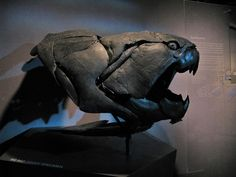 Dunkleosteus' armor. This fish-dude could reach up to 10 meters (33 feet) long, and lived around 370 million years ago.