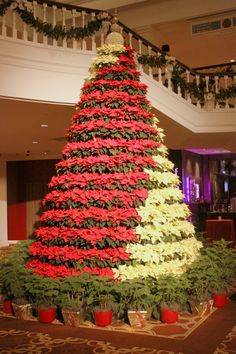https://flic.kr/p/CoWuCJ | Christmas Tree at Opryland Hotel lobby 2015 | This Christmas tree is made up of red and white flowers that spiral to the top. It is located inside the lobby of the main entrance to Gaylord Opryland Hotel.