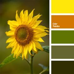 Color combination of this palette is well suited for the beginning of autumn, as it is dominated by warm yellow and orange colors, as well as green. amber, apple-green, army green, color matching, color of sunflowers, color palettes for decor, color solution, dark green, dark green color, decorating color schemes, ocher, Orange Color Palettes, palettes for designer.