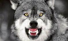 Картинки по запросу face wolf
