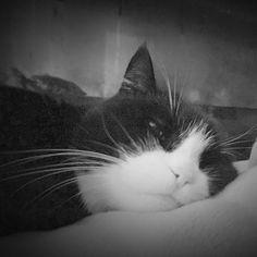 Billy. #cats #catsofinstagram #catsstagram