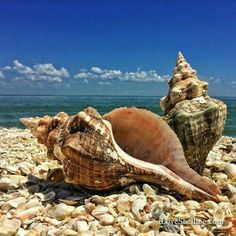 Sea And Ocean, Ocean Beach, Calm After The Storm, Sanibel Island, Ocean Creatures, Ocean Life, Marine Life, Beach Themes, Under The Sea