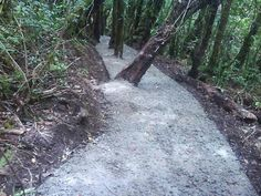Jalur Gunung Putri, TNGP Jawa Barat