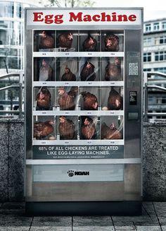 egg-guerrilla contro il maltrattamento di animali #guerrilla #unconventional
