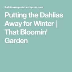 Putting the Dahlias Away for Winter   That Bloomin' Garden