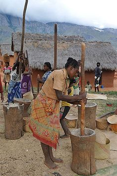 Femmes en train de piler le riz//Madagascar > Fianarantsoa et sa région > Andringitra > Vallée de Tsaranoro