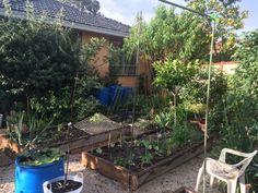 Bek's Backyard: Bean tee-pee in a wicking bed. Wicking Beds, Tee Pee, Backyard, Patio, Melbourne, Wicked, Beans, Outdoor Decor, Home Decor