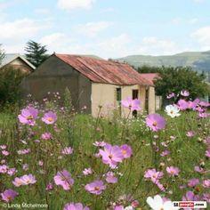 Wakkerstroom House Landscape, Landscape Photos, Landscape Art, Landscape Paintings, Pioneer House, Protea Art, Cosmos Flowers, Acrylic Painting Flowers, Native American Quotes