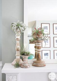 Decorating with Air Plants - Modern Air Plant Terrarium, Garden Terrarium, Moss Garden, Succulent Planters, Terrariums, Succulents Garden, Cactus Plants, Hanging Air Plants, Indoor Plants