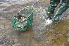 Trout Stocking in Pocahontas County, WV