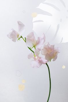 Anything with a great smell instantly triggers our instinctive love for florals all over again, and sweet peas are among the greatest in this respect.