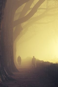 ♂ Misty tree path Golden Alley by Nicolas Maillot