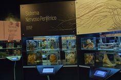 São Paulo ganha museu dedicado à anatomia humana
