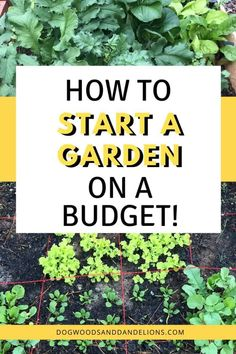 There are several methods you can use to start a garden on a budget. Whether you want to start a container garden, raised bed garden, or in the ground garden, these ideas will help you grow a garden on the cheap. Growing Vegetables At Home, Growing Herbs, Growing Flowers, Planting Flowers, Flower Gardening, Raised Bed, Raised Garden Beds, Gardening For Beginners, Gardening Tips