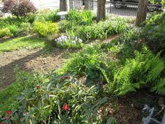 May 2015. This is still early growth. By July it was a jungle. I went out and tagged plants that were superfluous.
