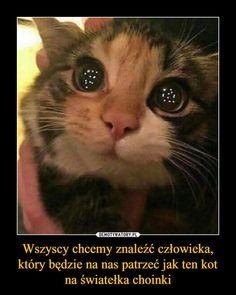 Wszyscy chcemy znaleźć człowieka, który będzie na nas patrzeć jak ten kot na światełka choinki –