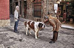 Colonge  querido perro. by costartroura
