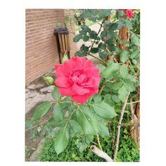 Flor São Bento do Sapucaí Campos de Jordão Foto de: Camila Pedral