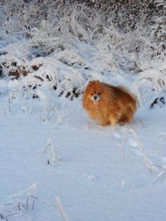Roosa ja talvi Animals And Pets, Corgi, Pets, Corgis