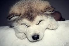 Sleepy pup!