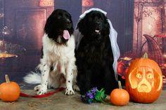Need funny dog related save the date wording – help! - Weddingbee