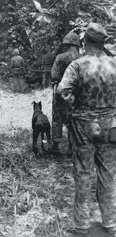 "Caption: ""Out on patrol, USMC war dogs alert their handlers to the possible presence of Japanese forces in the nearby jungle. While many Marines were skeptical of the War Dog program at first, the dogs quickly proved their worth, and became an essential part of the jungle fighting on Bougainville."""